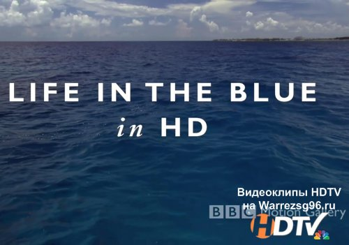 BBC Motion Gallery - Life In The Blue HD 1280x720