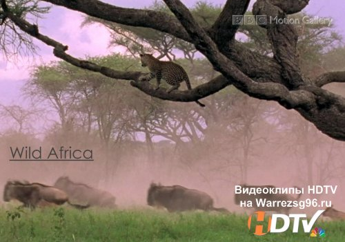 BBC Motion Gallery - Wild Africa HD 1266x720