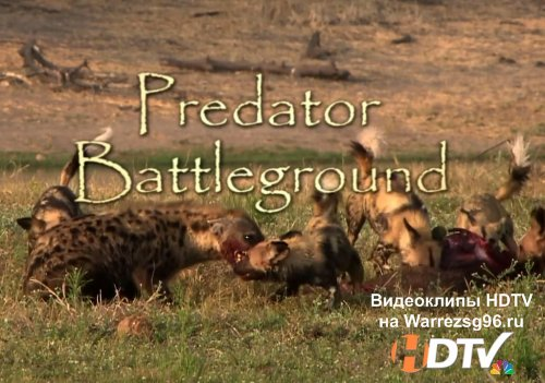 National Geographic - Поле боя хищников (Predator Battleground) HD 1280x720p